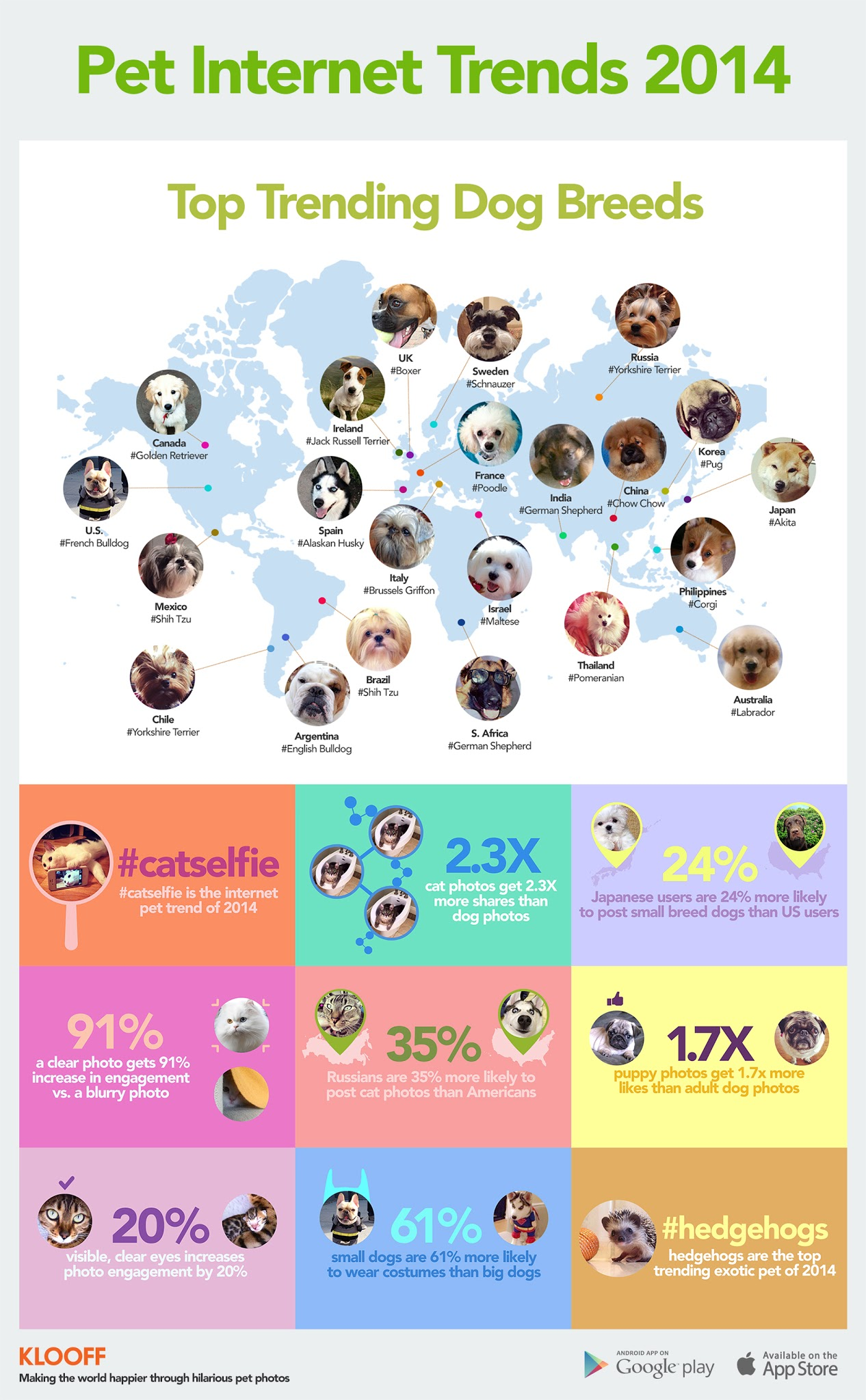 pet-internet-trends-2014-infographic